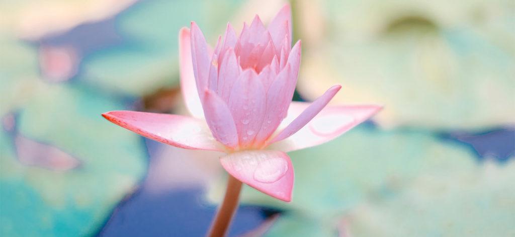 nimble_asset_lotus-1500